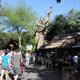 Disney's Animal Kingdom 042