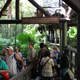 Disney's Animal Kingdom 078