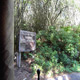 Disney's Animal Kingdom 081