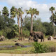 Disney's Animal Kingdom 100