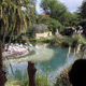Disney's Animal Kingdom 102