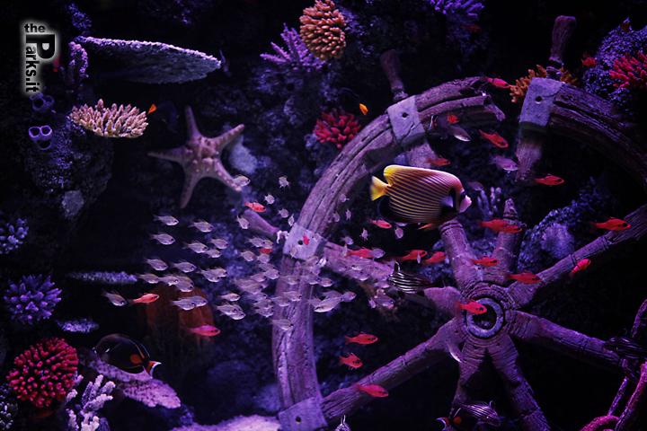 Sea Life Jesolo Aperture serali bioluminescenti