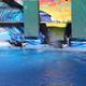 SeaWorld Orlando 019