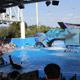 SeaWorld Orlando 021