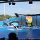 SeaWorld Orlando 022