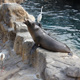 SeaWorld Orlando 026