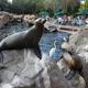 SeaWorld Orlando 028