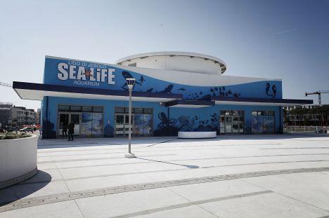 Sea Life Jesolo I festeggiamenti e il bilancio di un anno di apertura
