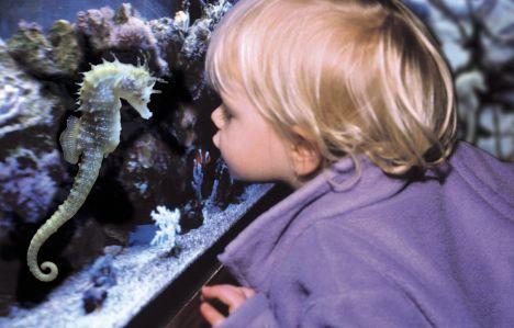 Acquario di Roma Sea Life - Expo Rinviata l'inaugurazione causa ritardo dei lavori