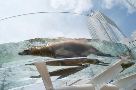 Tokyo Sunshine Aquarium - I pinguini in Giappone volano !