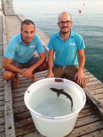 Sea Life Jesolo Piccolo squalo chiede aiuto al SEA LIFE