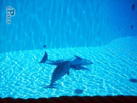 Gardaland Chiude il Palablù, i delfini trasferiti a Genova