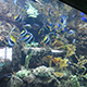Aquarium of the Pacific 003
