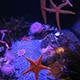 Aquarium of the Pacific 004