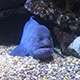 Aquarium of the Pacific 009