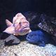 Aquarium of the Pacific 010