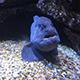 Aquarium of the Pacific 011