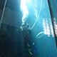 Aquarium of the Pacific 014