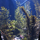 Aquarium of the Pacific 015