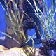 Aquarium of the Pacific 016