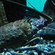 Aquarium of the Pacific 018
