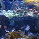 Aquarium of the Pacific 020