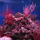 Aquarium of the Pacific 021