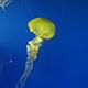 Aquarium of the Pacific 023