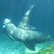 Aquarium of the Pacific 024