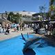 Aquarium of the Pacific 026