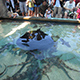 Aquarium of the Pacific 027