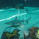 Aquarium of the Pacific 029