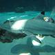 Aquarium of the Pacific 031