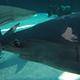 Aquarium of the Pacific 032