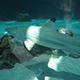 Aquarium of the Pacific 033