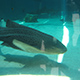 Aquarium of the Pacific 035