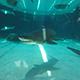Aquarium of the Pacific 037