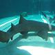 Aquarium of the Pacific 038