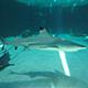 Aquarium of the Pacific 039