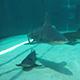 Aquarium of the Pacific 040