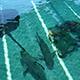Aquarium of the Pacific 042