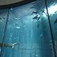 Aquarium of the Pacific 048