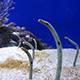 Aquarium of the Pacific 059