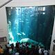 Aquarium of the Pacific 060