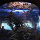Aquarium of the Pacific 068