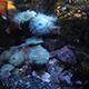 Aquarium of the Pacific 069