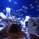 Aquarium of the Pacific 070