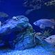 Aquarium of the Pacific 071