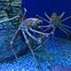 Aquarium of the Pacific 073