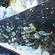 Aquarium of the Pacific 074